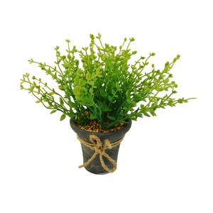 Grama Verde Vaso 21cm