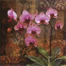 Gravura Orquídea Pink 30x30cm