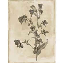 Gravura Delicate Flower 2 40x30cm