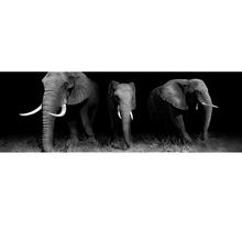 Gravura Elefante 90x30cm