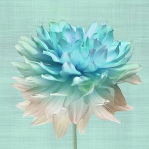 Gravura Flor Mix 70x70cm