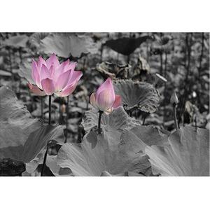 Gravura Flor Rosa 40x50cm