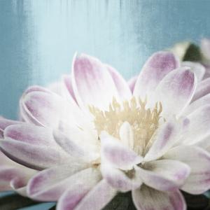 Gravura Floral 25x25cm