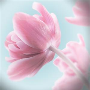 Gravura Floral 50x50cm