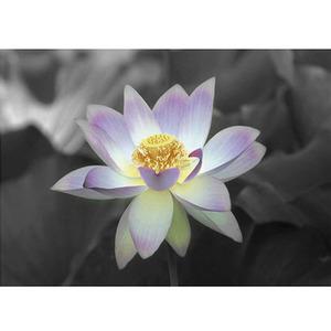 Gravura Florescer 40x50cm