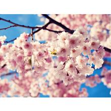 Gravura Pink Spring 30x40cm