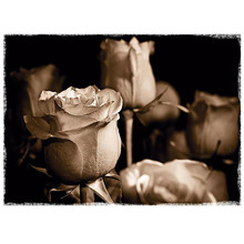 Gravura Rosas Sépia 40x50cm