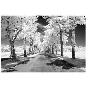 Gravura Rua Arborizada 40x50cm