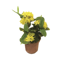 Ixora Yellow Star 8L