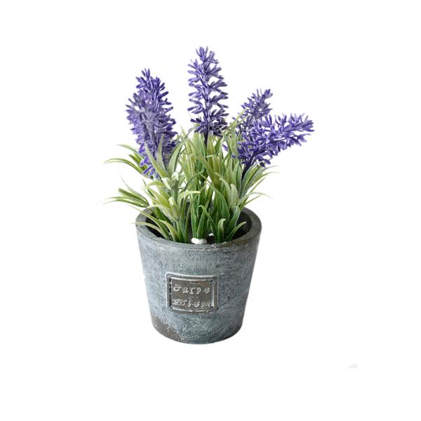 Lavanda lil s vaso 18cm leroy merlin for Lavanda coltivazione in vaso