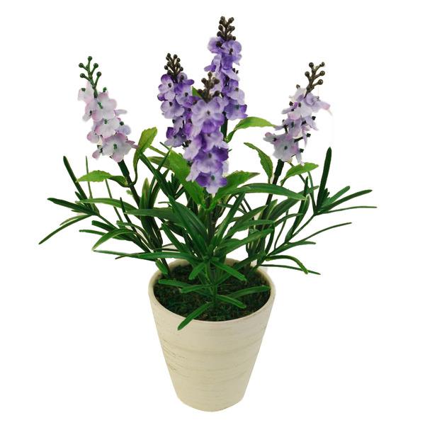 Lavanda lil s vaso 22cm leroy merlin for Lavanda coltivazione in vaso