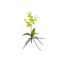 Orquídea Dançante Haste 37cm