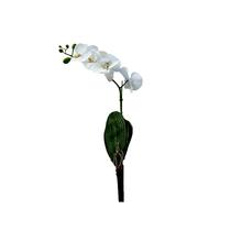 Orquídea Toque Real Branca Haste 70cm