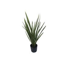 Phormium Verde Vaso 8L