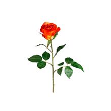 Rosa Laranja 50cm
