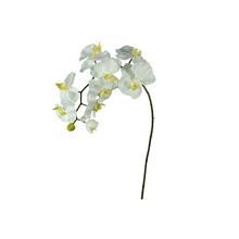 Orquídea Phalaenopsis Amarela 92cm