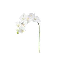 Orquídea Phalaenopsis Branca 120cm