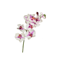 Orquídea Phalaenopsis Lilás 104cm