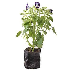 Planta Natural Mudas Variadas Saco 10cm Spasso Verdi
