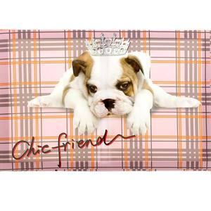 Pôster Canvas Chic Dog 30x45cm Importado