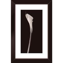 Quadro Black Ibiscus 19x29cm