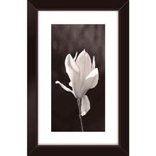Quadro Black Orquidea 19x29cm