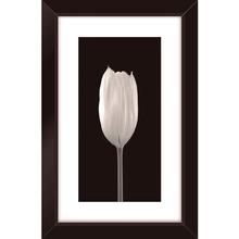 Quadro Black Tulipa 19x29cm
