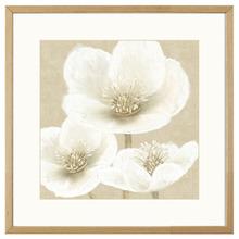 Quadro Classic Flowers 43x43cm