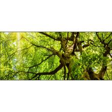 Quadro Float Vidro Tree Verde 120x40m