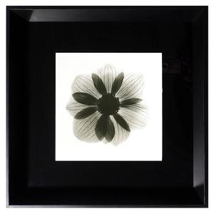 Quadro Flor Preto e Branco com Moldura Preta 35x35cm