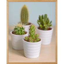 Quadro Little Cactus 45x32cm