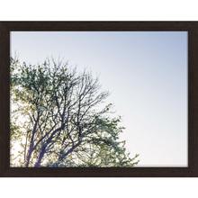 Quadro Morning Tree ll 29x39cm