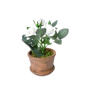 Rosa Branca Vaso 20cm