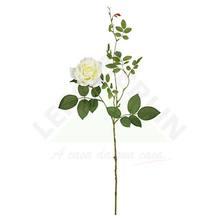 Rosa Diana Creme 75cm Florarte