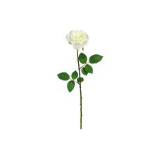 Rosa Georgia Cha 66cm