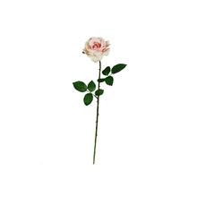 Rosa Georgia Rosa 66cm