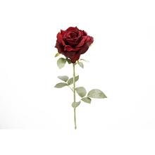 Rosa Rainha Anne Marsala 74cm