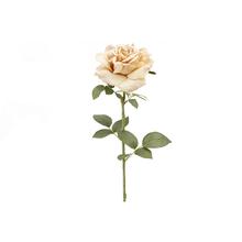 Rosa Rainha Anne Nude 74cm