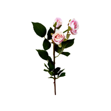 Rosa Toque Real Haste 45cm