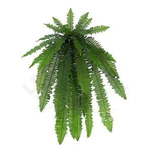 Samambaia Americana Verde 102cm Florarte