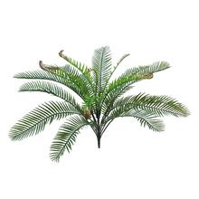 Samambaia Cycas 52cm