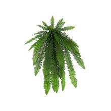 Samambaia Verde Pendente 56cm