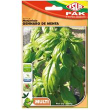 Semente Manjericão Gennaro de Menta Isla Sementes