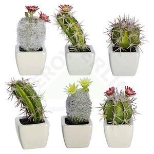 Suculenta Cactus Branca 8cm Florarte