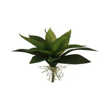 Suculenta Premium 24cm