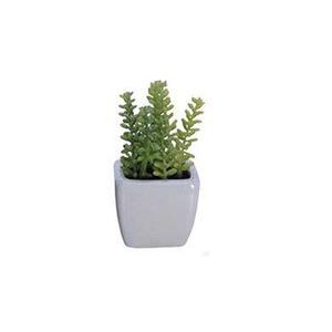 Suculenta vaso 8cm leroy merlin for Vaso terracotta leroy merlin