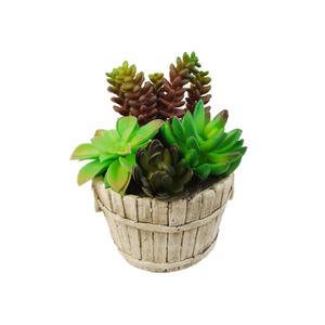 Suculenta Verde Vaso 21cm