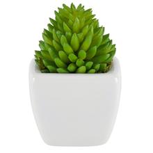 Suculenta Verde Vaso 8cm