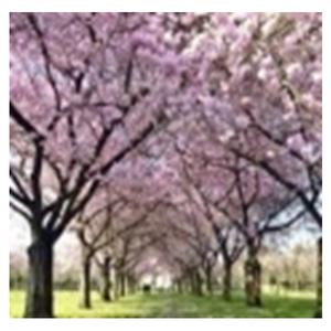 Tela Caminho entre Árvores 30x30cm