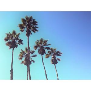 Tela Canvas 30X40 Five Palms Inspire